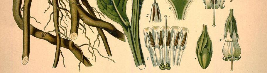 Kšhler's Medizinal-Pflanzen in naturgetreuen Abbildungen mit kur
