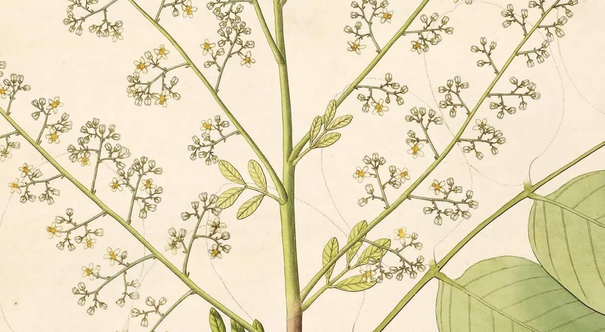 Flora Fauna 18th Century Illustration